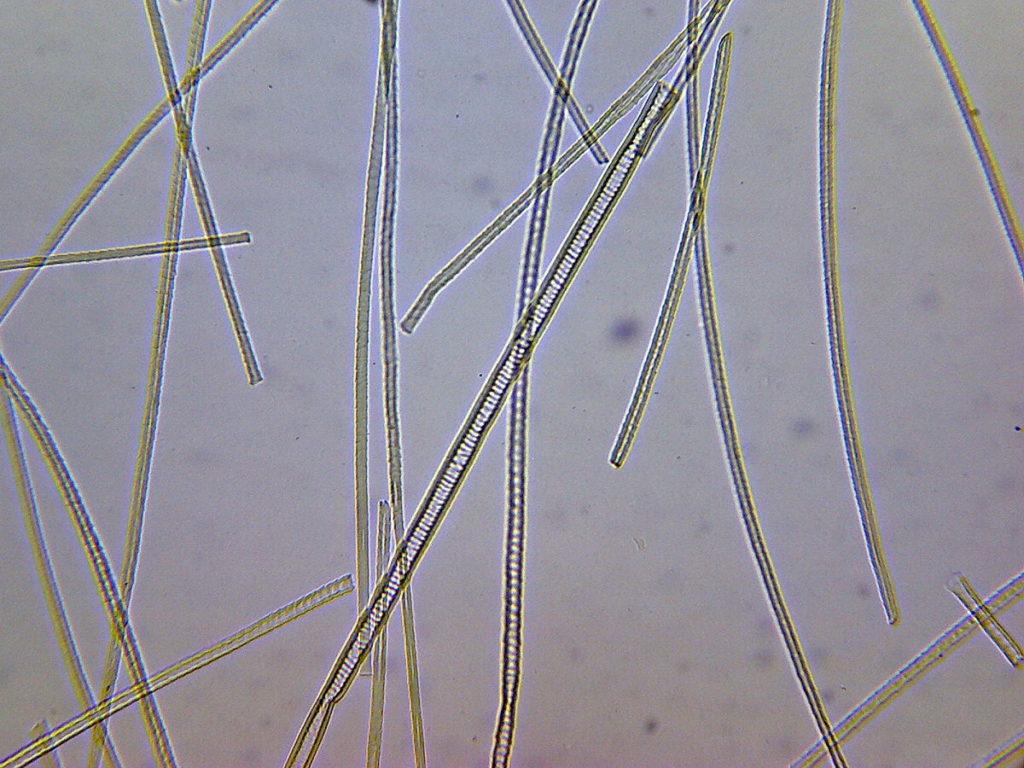 Шерсть кота под микроскопом
