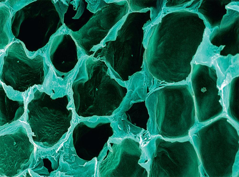 Человеческие клетки под микроскопом
