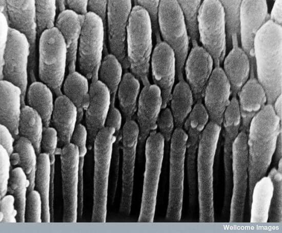 Чувствительные волоски уха